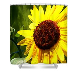 Shower Curtain featuring the photograph Sunflower 4 by Marty Koch