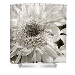 Sunflower 4 Shower Curtain by Simone Ochrym