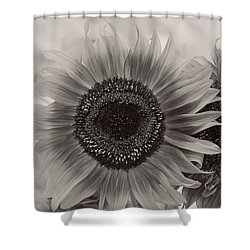Sunflower 6 Shower Curtain by Simone Ochrym