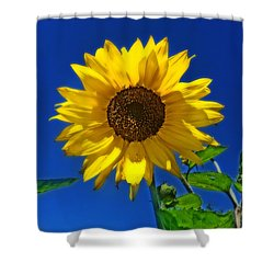 Maize 'n Blue Shower Curtain