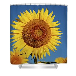 Sunflower And Blue Sky Shower Curtain by Nancy Landry