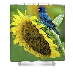 Sunflower Blue Shower Curtain