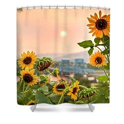 Sunflower Blue Bridge Shower Curtain