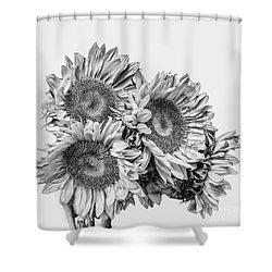 Sunflower Bouquet Bw Shower Curtain