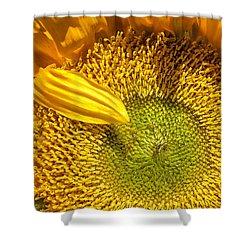 Sunflower Closeup Shower Curtain