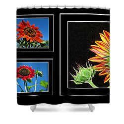 Shower Curtain featuring the photograph Sunflower Collage by Joyce Dickens