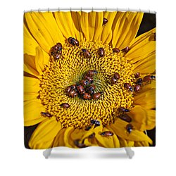 Sunflower Covered In Ladybugs Shower Curtain