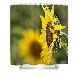 Shower Curtain featuring the photograph Sunflower Delight by Kathy Churchman