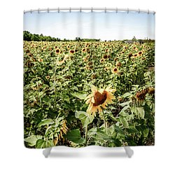 Shower Curtain featuring the photograph Sunflower Field by Alexey Stiop