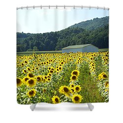 Sunflower Field Shower Curtain by Annlynn Ward