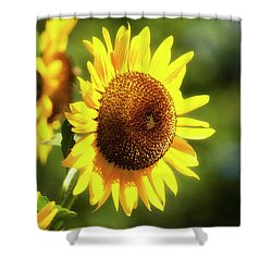Shower Curtain featuring the photograph Sunflower Field by Christina Rollo