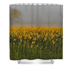 Sunflower Field On A Foggy Morn Shower Curtain