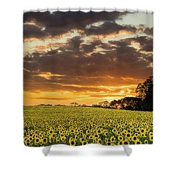 Sunflower Fields Sunset Shower Curtain