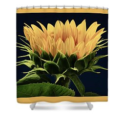 Shower Curtain featuring the photograph Sunflower Foliage And Petals by Chris Berry