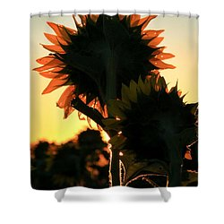Shower Curtain featuring the photograph Sunflower Greeting  by Chris Berry
