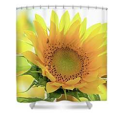 Sunflower In Golden Glow Shower Curtain