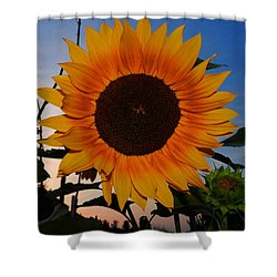 Sunflower In The Evening Shower Curtain