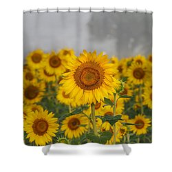 Sunflower In The Fog Shower Curtain