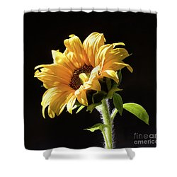 Sunflower Isloated On Black Shower Curtain