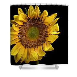 Shower Curtain featuring the photograph Sunflower by James Sage
