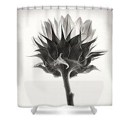 Shower Curtain featuring the photograph Sunflower by John Hansen