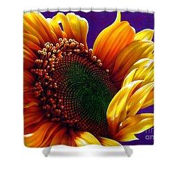 Sunflower Shower Curtain by Jurek Zamoyski