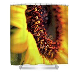 Shower Curtain featuring the photograph Sunflower Macro by Jennie Marie Schell