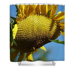 Sunflower, Mammoth With Bees Shower Curtain