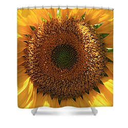Sunflower  Shower Curtain by Marna Edwards Flavell