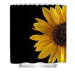 Sunflower Number 3 Shower Curtain by Steve Gadomski