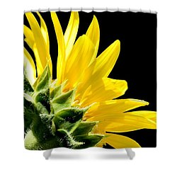 Sunflower On Black Shower Curtain