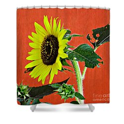 Shower Curtain featuring the photograph Sunflower On Red 2 by Sarah Loft