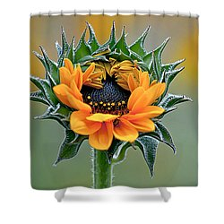 Sunflower Opens Shower Curtain by Emerald Studio Photography