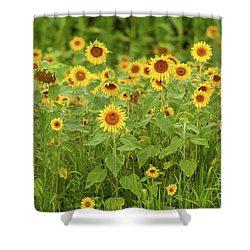 Sunflower Patch Shower Curtain