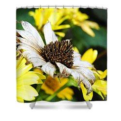 Sunflower Promise Shower Curtain by Margie Avellino
