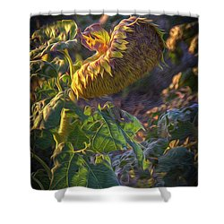 Sunflower Repose Shower Curtain