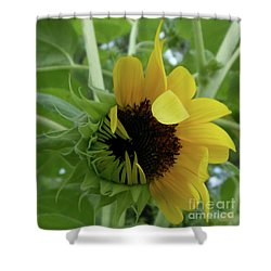 Sunflower Rising Shower Curtain