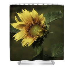 Sunflower Romantica Shower Curtain by Richard Cummings