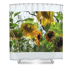 Sunflower Secret Garden - Photography - Floral Shower Curtain
