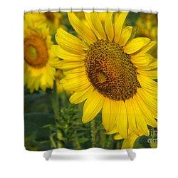 Sunflower Series Shower Curtain by Amanda Barcon