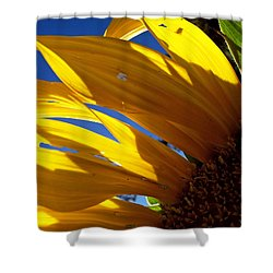 Sunflower Shadows Shower Curtain