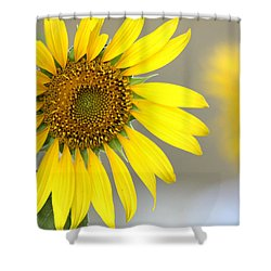 Shower Curtain featuring the photograph Sunflower by Sheila Brown