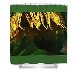 Sunflower Shower - Images From The Garden - Floral Photography - Macro Shower Curtain