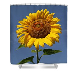 Sunflower Standing Tall Shower Curtain