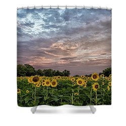 Sunflower Sunrise Shower Curtain