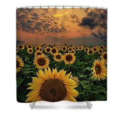 Shower Curtain featuring the photograph Sunflower Sunset  by Aaron J Groen