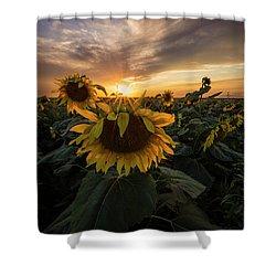 Shower Curtain featuring the photograph Sunflower Sunstar  by Aaron J Groen