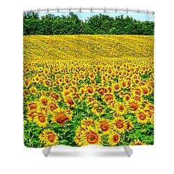 Sunflower Shower Curtain by Thomas M Pikolin