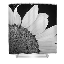 Sunflower Three Quarter Shower Curtain by James BO  Insogna