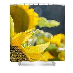 Sunflowers 14 Shower Curtain